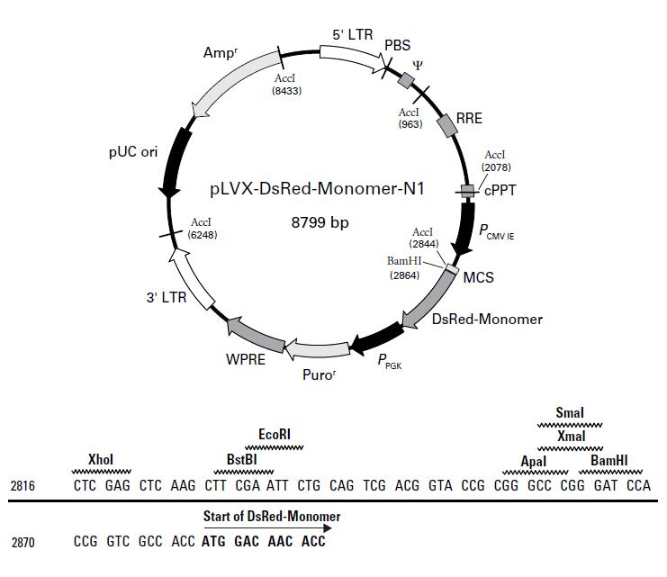 pLVX-DsRed-Monomer-N1