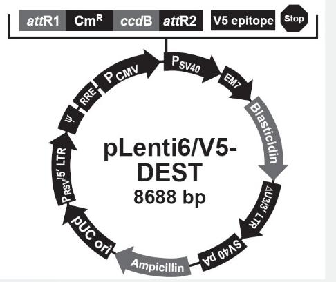 pLenti6/V5-DEST