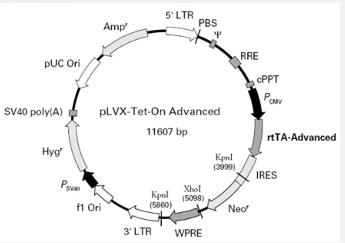 pLVX-Tet-On-Advanced