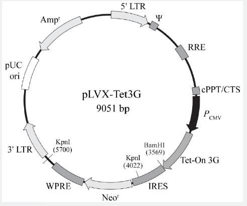 pLVX-Tet 3G