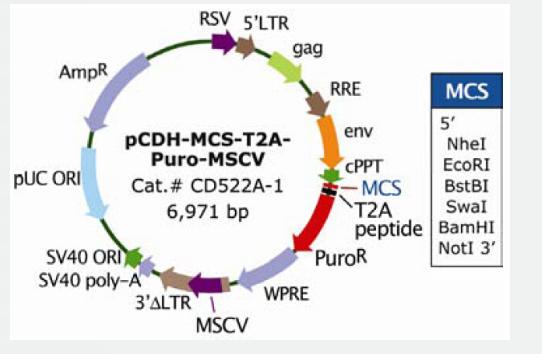 pCDH-MCS-T2A-Puro-MSCV