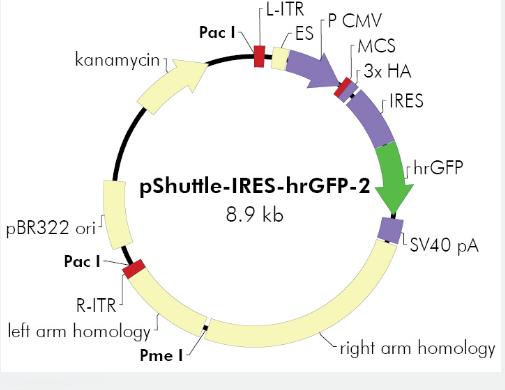 pShuttle-IRES-hrGFP2