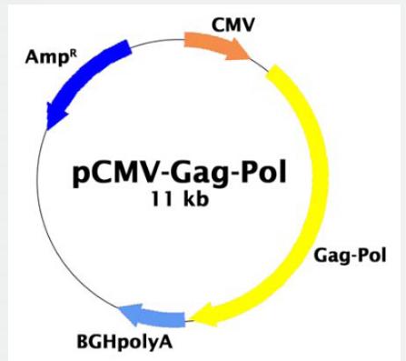pCMV-Gag-pol