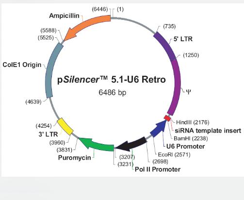 pSilencer5.1-U6-Retro