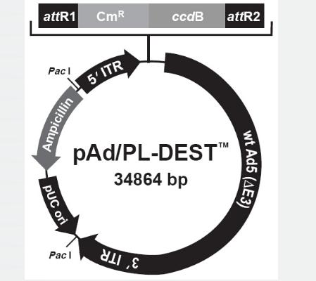 pAd/PL-DEST