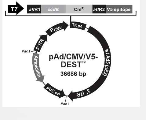 pAd/CMV/V5-DEST