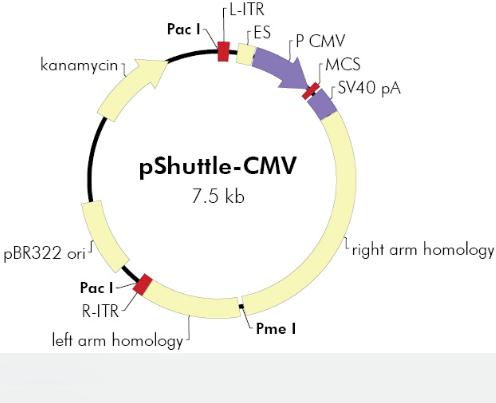pShuttle-CMV