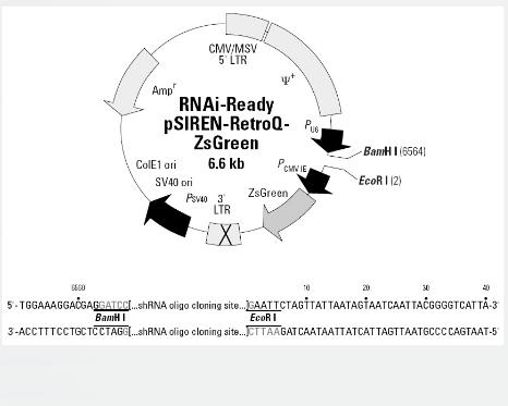RNAi-Ready pSIREN-RetroQ-ZsGreen
