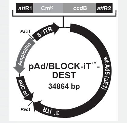 pAd/BLOCK-iT-DEST RNAi Gateway Vector