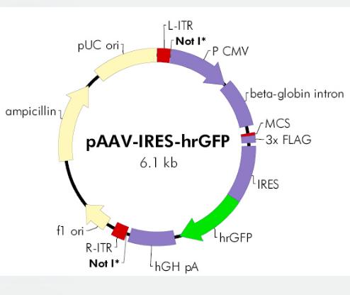 pAAV-IRES-hrGFP