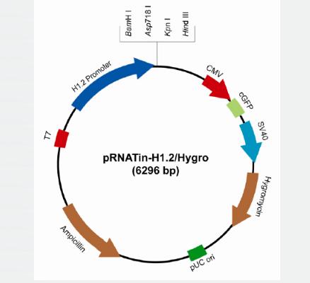 pRNATin-H1.2/Hygro