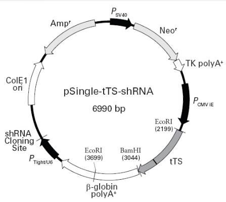 pSingle-tTS-shRNA
