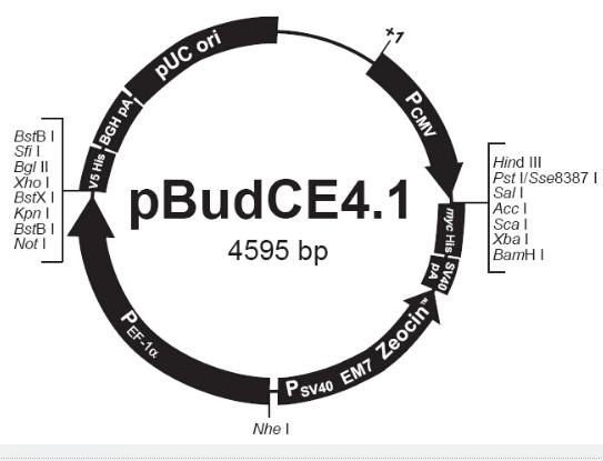 pBudCE4.1