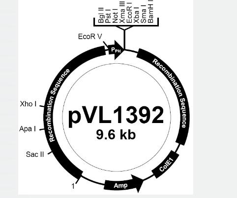pVL1392