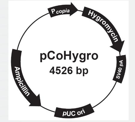 pCoHygro