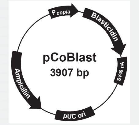 pCoBlast