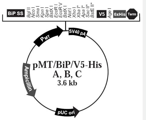 pMT-Bip-V5-HisA