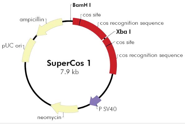 SuperCos1