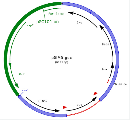pSIM5