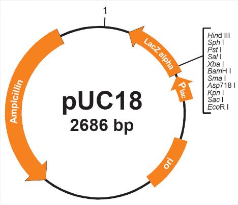 pUC18
