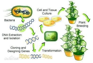 磁珠法植物基因组DNA提取试剂盒